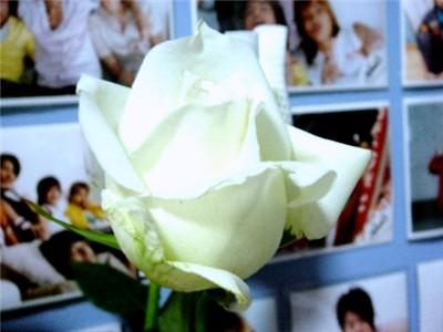whiterosec1.jpg