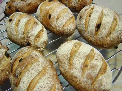 20080203ナッツとチョコチップのずんぐりパンたくさん