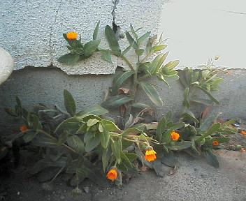 20080127140403.jpg