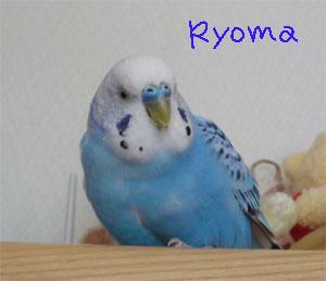ryo112.jpg
