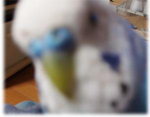 ryo46.jpg