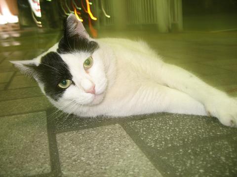 品川駅の猫