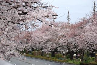 090405daigaku1.jpg