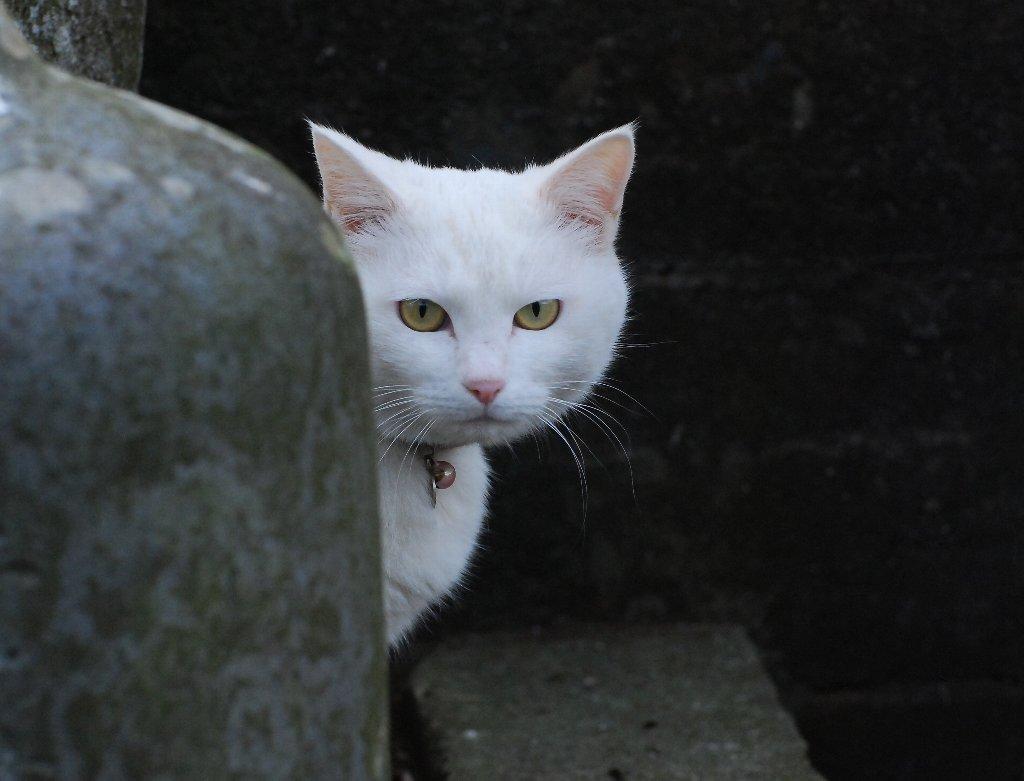 Cats01.jpg