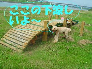 komugi 097