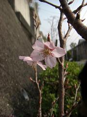 08.3.桜