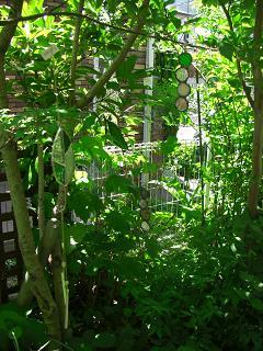 08.6.木の葉の庭