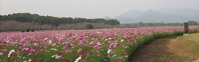 kosumosu0089.jpg