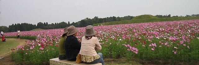 kosumosu1111.jpg