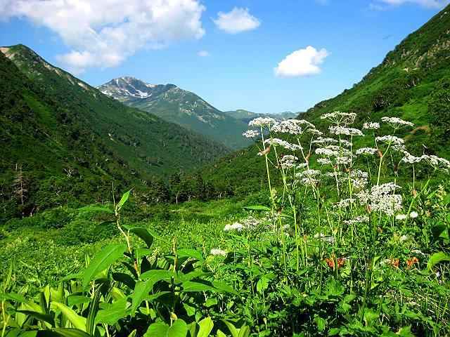 08アルプスの花々