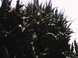 2008_0203_135.jpg