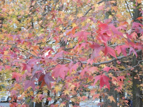 2011-11-27+019_convert_20111206213015.jpg