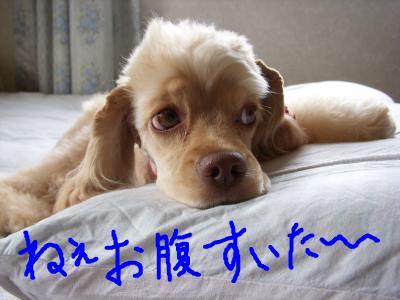 snap_kororiohne_20096213237.jpg