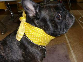 柚子はクールタイを装備した!
