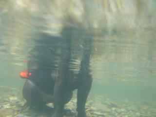 水中から柚子さん