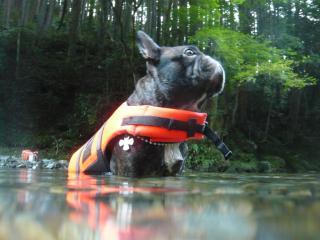 水上から柚子さん
