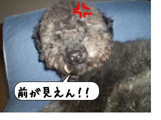 snap_kota12_2009120103132.jpg