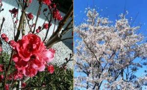 春は花がたくさん咲いてうれしくなります