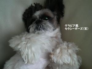 セクシーな小太郎