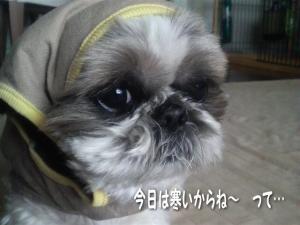 今日は寒いね~