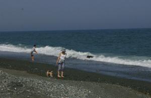夏です。海です。