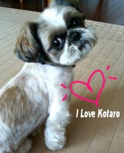 I love kotaro.jpg