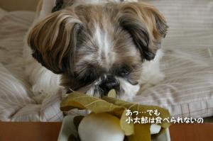 小太郎は香りだけだけど