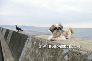 鳩と小太郎