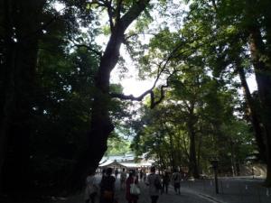 立派な木立に囲まれた境内