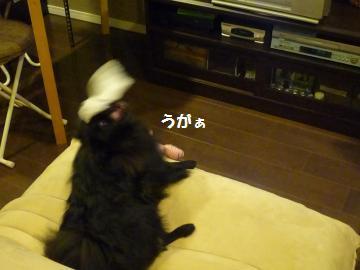 0910-5_convert_20080912002117.jpg