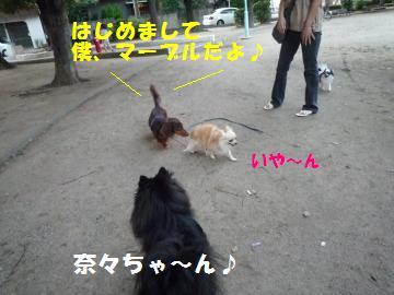 0922-7_convert_20080922212959.jpg