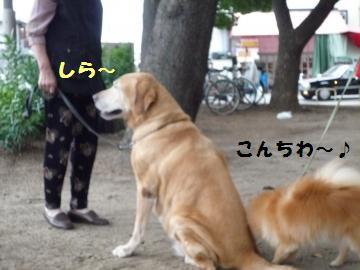 0927-6_convert_20080928002310.jpg