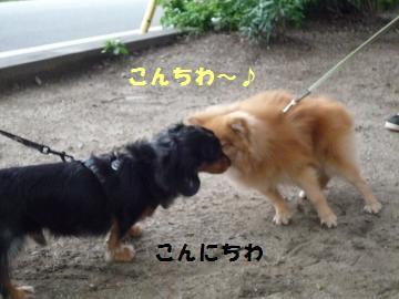 0927-8_convert_20080928002426.jpg