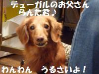 0928-1_convert_20080928214444.jpg