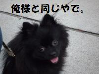 1004-6_convert_20081004215855.jpg