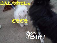 1010-10_convert_20081011014356.jpg