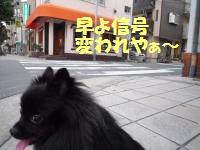 1010-3_convert_20081011014009.jpg