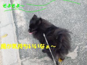 1011-1_convert_20081012205750.jpg
