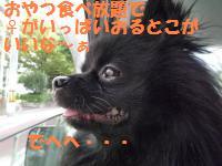 1012-2_convert_20081012210214.jpg