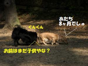 1013-19_convert_20081014115341.jpg