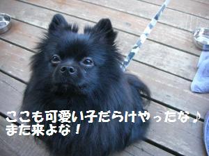 1013-32_convert_20081014120440_20081015083128.jpg