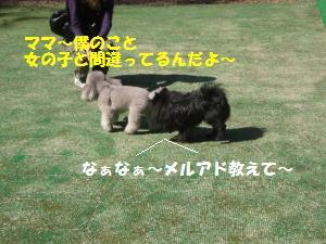 1013-3_convert_20081014113834.jpg