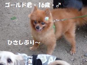 1016-4_convert_20081016202607.jpg