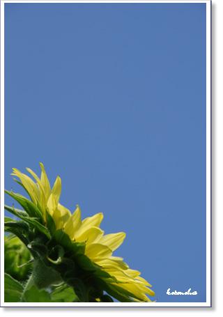 元気を呼ぶ花