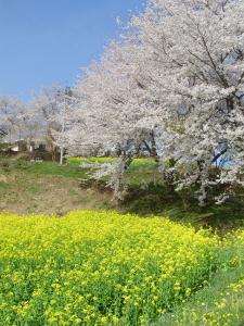 kotori_09_04_19_1.jpg