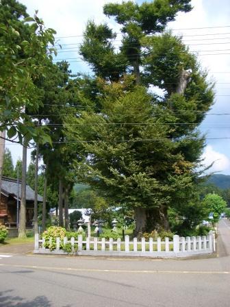 織田町堤2CIMG2938