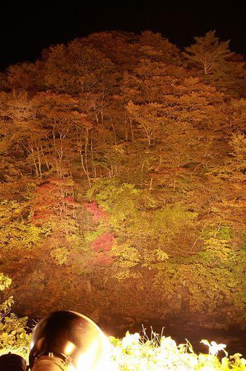 夏井川渓谷の紅葉