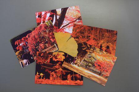 しゅうさんのポストカード
