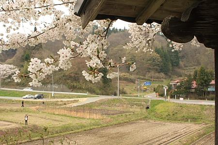桜から見る風景
