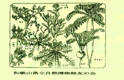 七草の説明